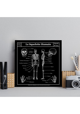 Planche Scolaire Murale - Anatomie - Squelette Humain - Ciment Factory