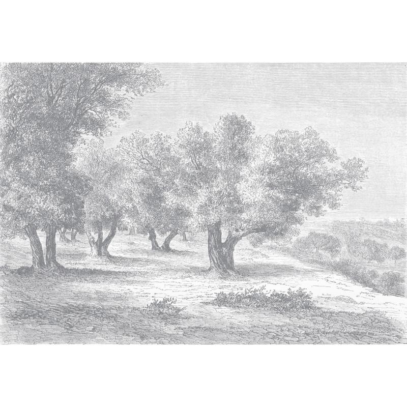 Papier Peint Panoramique Gravure Les Oliviers Ciment