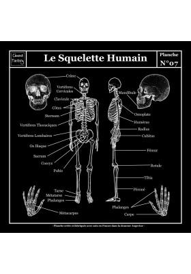 Tapis Vinyle Planche Scolaire - Anatomie - Squelette Humain - Ciment Factory