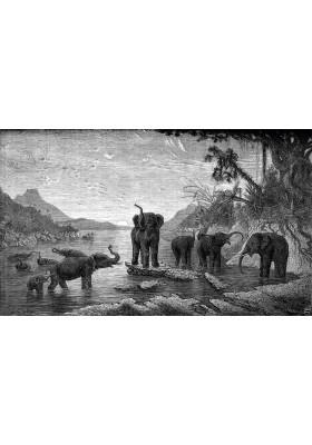 Tapis Vinyle Gravure - Les Eléphants - Ciment Factory
